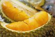 tempat makan durian enak di Medan, Ucok Durian